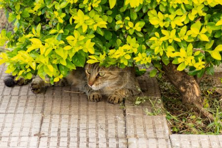 Photo for A cat under a small tree. Abandoned cat. Street animal. - Royalty Free Image