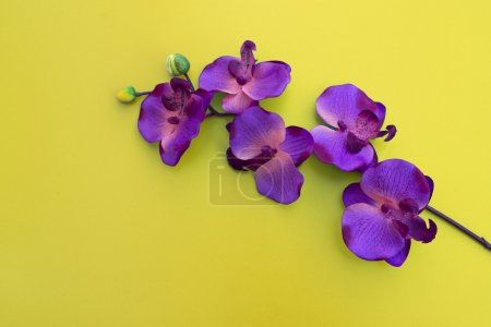 purple orchid on yellow table