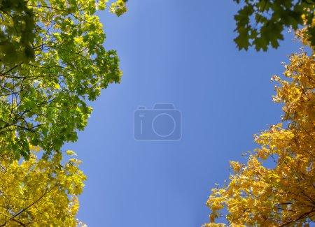 autumn trees against the blue sky