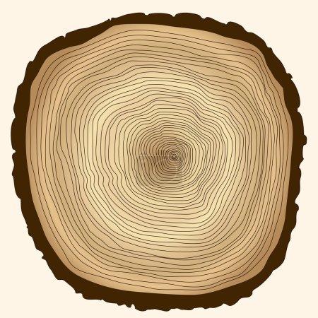 tree rings, cut stump