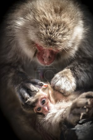 Snow monkey mother and child
