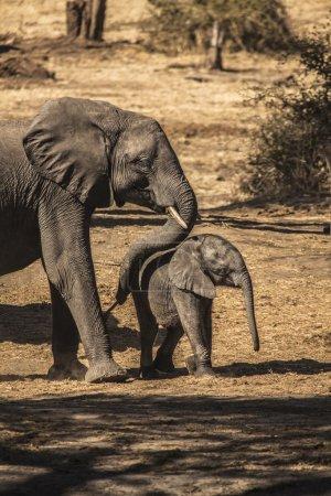 Elephant mother pushing her child