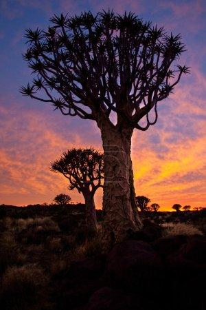 Sunset at savanna