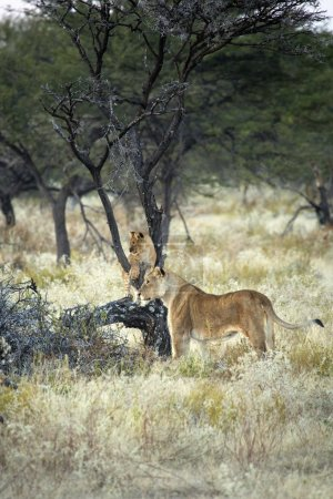 Sight of the Namibian Wilderness
