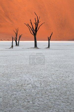 Photo pour Deadvlei, Namibie - image libre de droit
