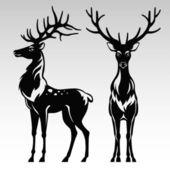 Black and white deers