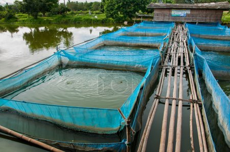 Nile tilapia Fish farms with blue net and bamboo p...