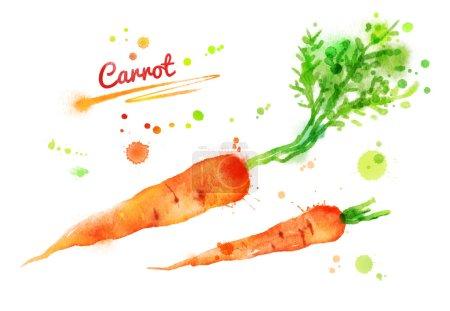 Photo pour Dessiné de main illustration aquarelle de carottes avec des éclaboussures de peinture. - image libre de droit