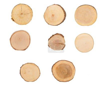 Photo pour Vue détaillée de la coupe de l'arbre (fond blanc ) - image libre de droit