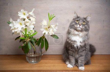 mignon chat debout à côté de vase de fleurs