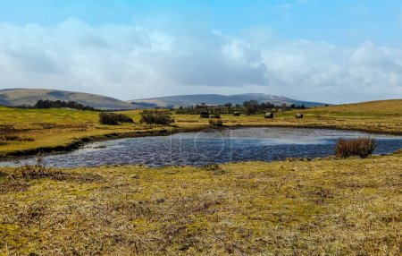 Photo for A panorama view of a dew pond on heath land in the Brecon Beacons, Wales, UK - Royalty Free Image