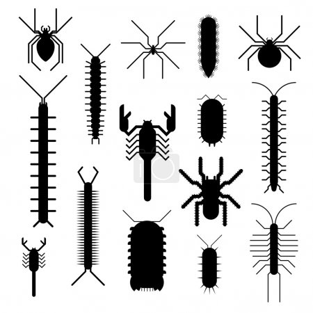 Spiders and scorpions dangerous insects