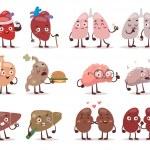 Постер, плакат: Human organs characters vector illustration
