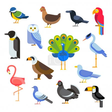 Birds vector set illustration. Egle, parrot, pigeon and toucan. Penguins, flamingos, crows, peacocks. Black grouse, chicken, sofa, heron