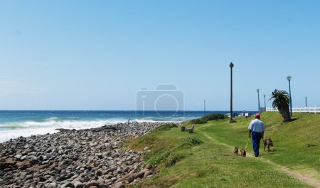 Sunshine Coast ocean and people with dogs
