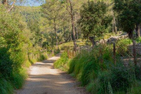 Photo pour Route de montagne sinueuse avec paysage méditerranéen plein d'arbres et de sous-bois vert - image libre de droit