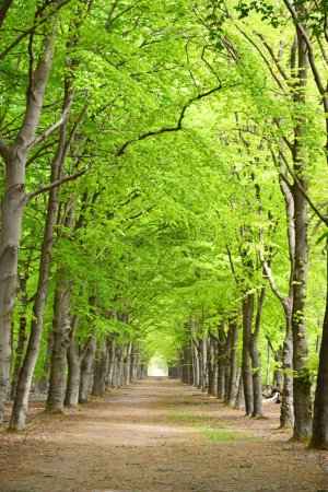 Photo pour Bois de Forrest avec fond d'arbres avec perspective route chemin de marche - image libre de droit