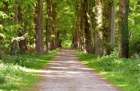 Photo pour Automne automne forrest woods fond avec perspective route chemin de marche - image libre de droit