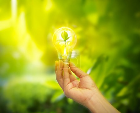 Foto de Mano sosteniendo una bombilla de luz con energía y hojas verdes frescas dentro en el fondo de la naturaleza, focu suave - Imagen libre de derechos