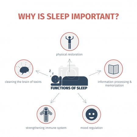 Illustration for Sleep infographic. Importance of sleep, functions. Flat vector illustration. Mind map - Royalty Free Image