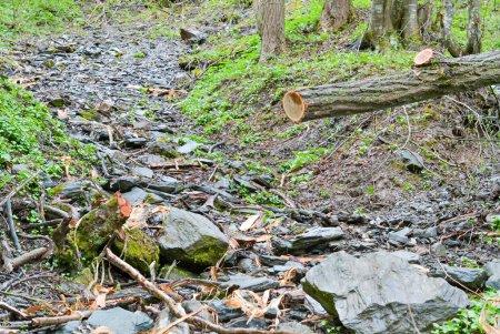 Photo pour Détail de la zone de nature et de la forêt avec un arbre abattu qui a été coupé - image libre de droit