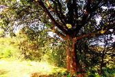 Tree in the autumn