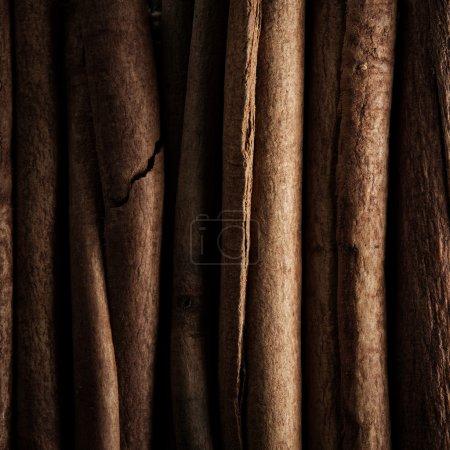 Cinnamon sticks closeup low key image macro