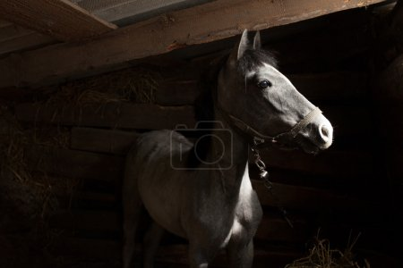 Horse in barn looking outside