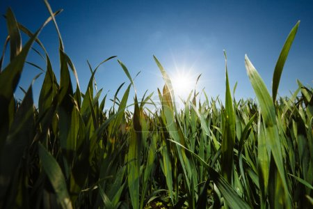 Grass low angle image