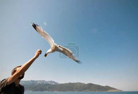 Men giving a cookie to flying seagull