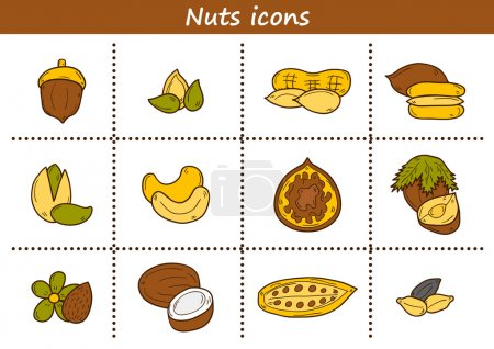 Set of cartoon hand drawn objects on nuts theme: hazelnut, pumpkin and sunflower seeds, peanut, pecan, pistachio, cashew, walnut, acorn, almond, coconut, cocoa. Raw healthy food concept