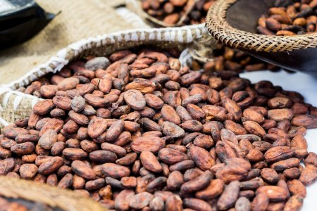 Photo for Cocoa beans - Royalty Free Image