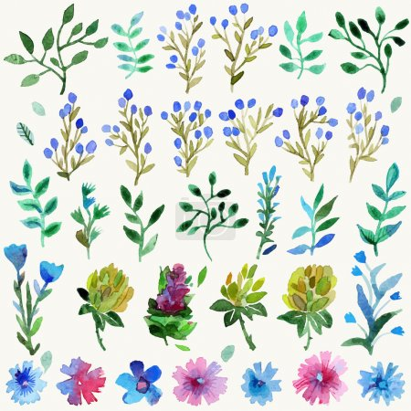 Watercolor vector set with leaves and flowers. Hand drawn plant.