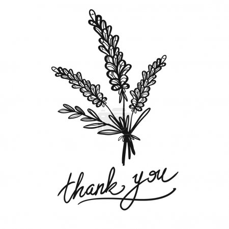Illustration for Contemporary greeting card with thank you phrase and lavender bouquet. Sketch for floral rustic eco decoration autumn celebration or banner. Hand drawn symbols on white backdrop. - Royalty Free Image
