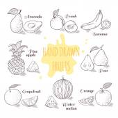 Set of hand drawn outline fruits with slice Doodle illustration