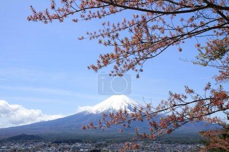 Cherry blossoms in Shuzenji temple, Izu, Shizuoka, Japan