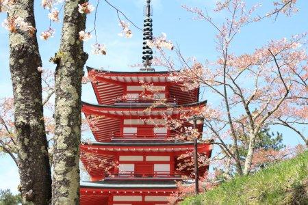 Cherry blossoms with five storied pagoda at Arakura yama Sengen park