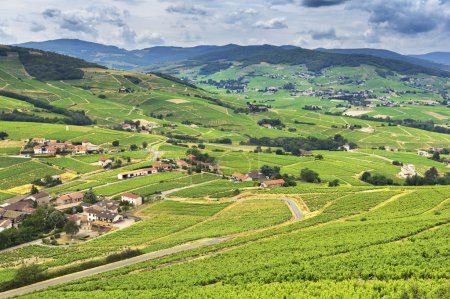 Mountains and vineyards of Beaujolais, France
