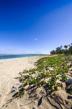 Photo pour Plage de Saint Pierre, Ile de La Reunion - image libre de droit