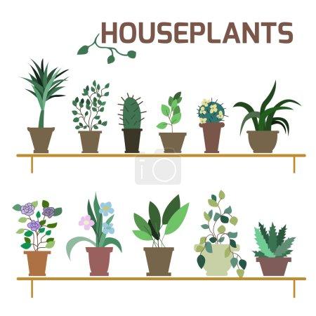 Illustration for Vector Set of indoor plants in pots. Illustration - Royalty Free Image