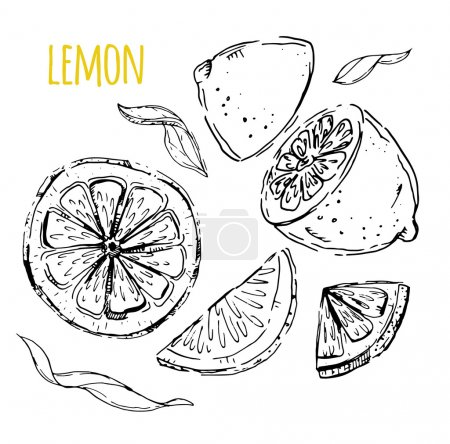 Illustration for The drawn set of lemons. Lemon segments, juicy lemon. White background. Vector illustration - Royalty Free Image