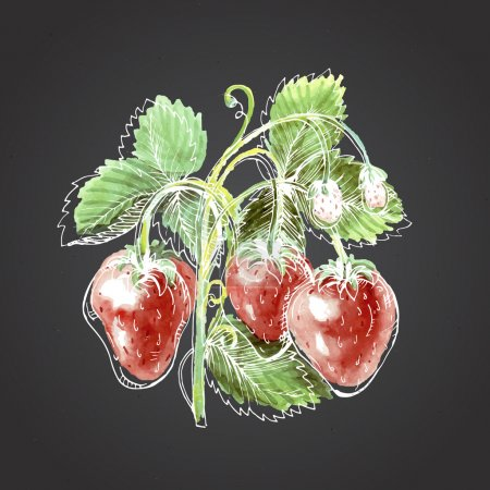 Watercolor drawing of strawberry. Strawberry against a dark back