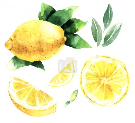 Illustration for Watercolor set of lemons. Lemon segments, juicy lemon. Vector illustration - Royalty Free Image