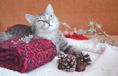 Contented cat, funny cat