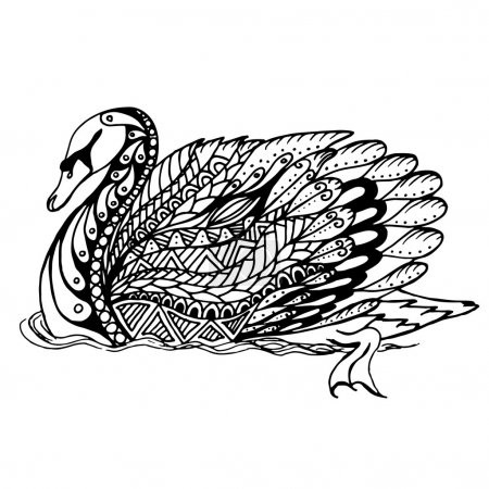 Hand drawn Swan on water for anti stress Coloring Page with high details, isolated on white background, illustration in zentangle style. Vector monochrome sketch. Bird collection.
