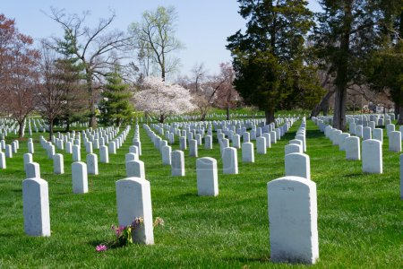 Arlington Cemetery graves