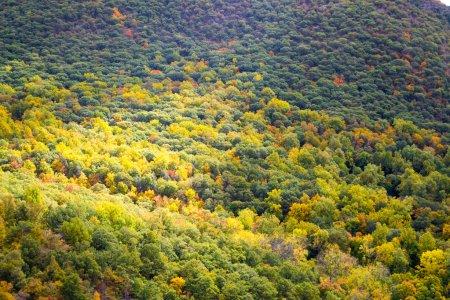 Natur, im freien, Blatt, Wasser, Blätter, fallen - B87856470