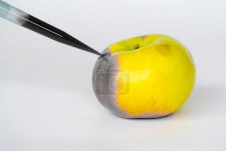 Photo pour Les OGM sont des organismes vivants dont le matériel génétique a été modifié pour améliorer certaines qualités par rapport à d'autres. - image libre de droit