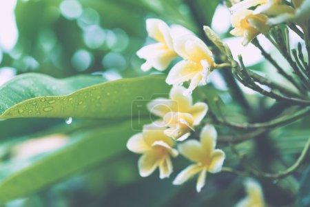 feuilles vertes juteuses avec des gouttes de pluie