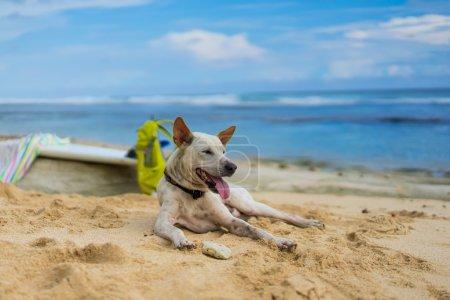 chien blanc couché sur le sable face à l'océan
